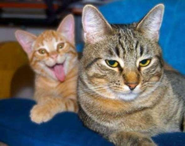 Коты, которые испортили фотографии (17 фото)