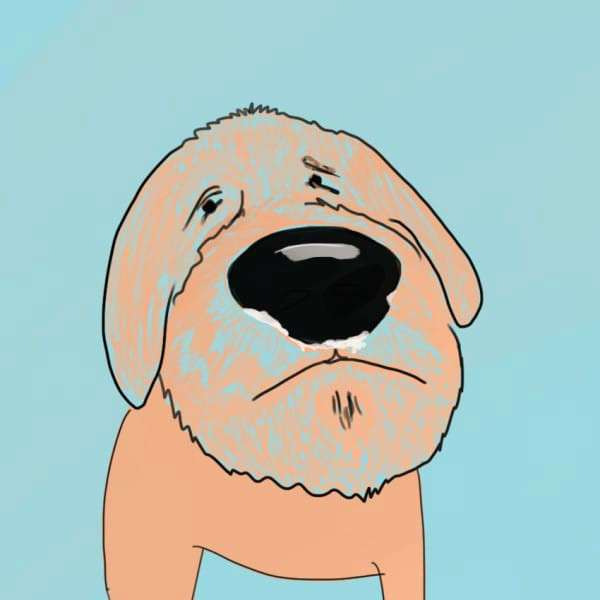 Что хочет сказать вам собака. Как расшифровать странное поведение пса