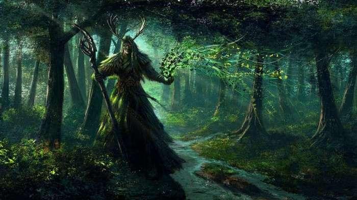 Встреча в лесу (1 фото)