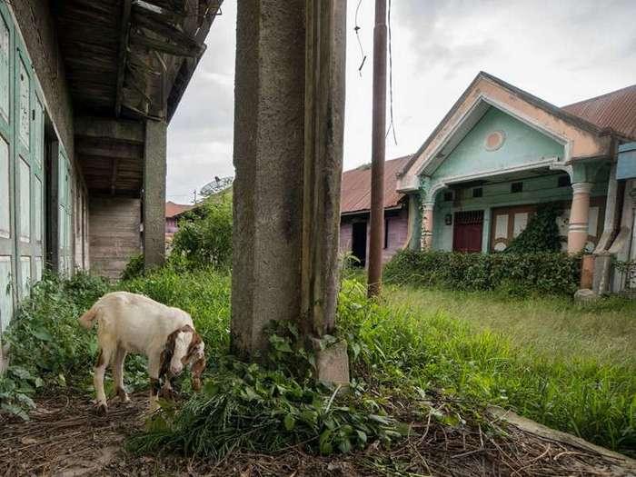 Деревни-призраки по соседству с действующим вулканом Синабунг (29 фото)
