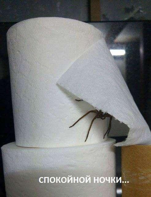 Подборка прикольных картинок из паутины (45 фото)