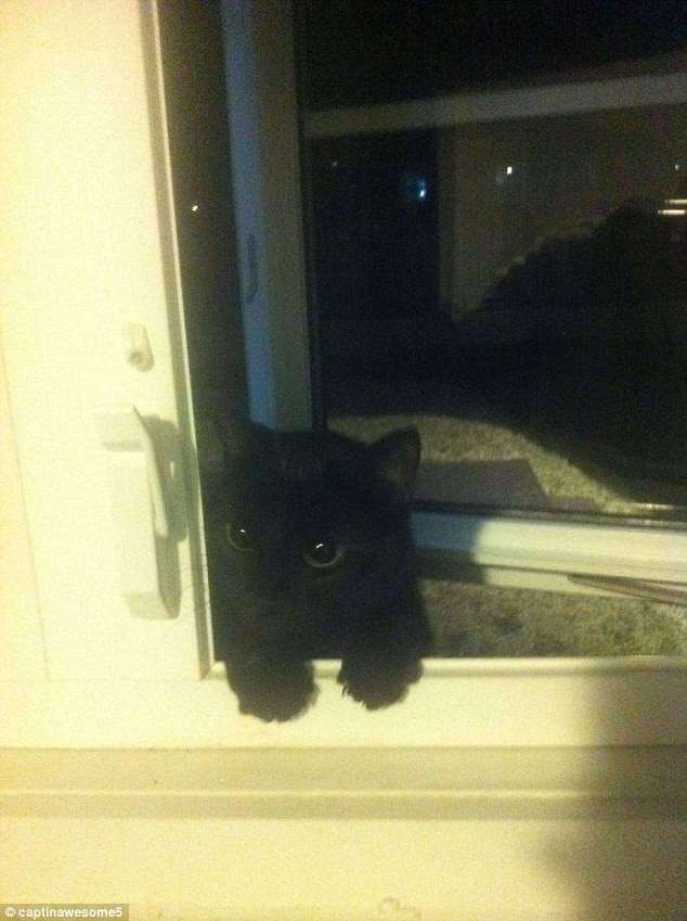 Кошки, которые идут, куда захотят! (29 фото)