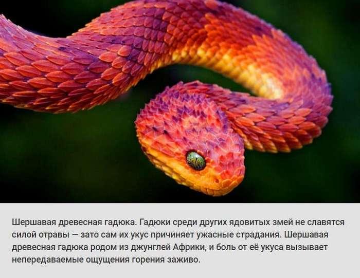 Животные и растения, способных причинить очень сильную боль (10 фото)