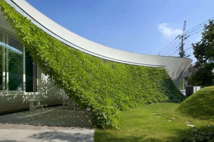 Дом с живой стеной в Японии (7 фото)