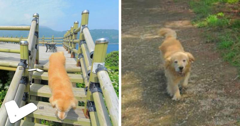 Пёс следовал за фотографом Google карт и попал в каждый кадр (11 фото)