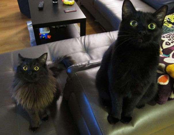 Эти кошки явно переборщили с кошачьей мятой! (37 фото + 4 гиф)