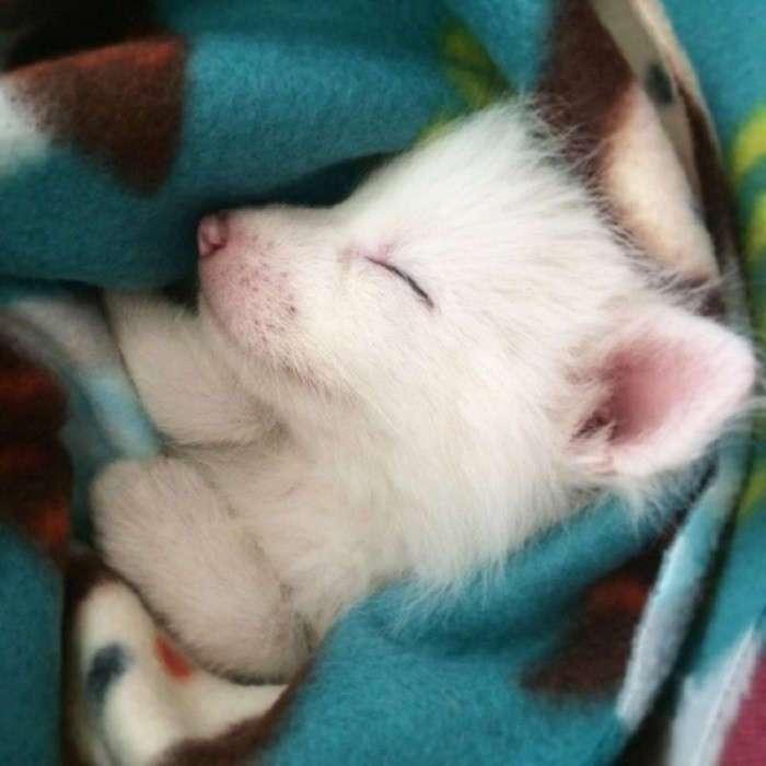 Самые милые животные (15 фото)