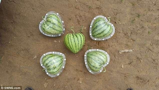 В Китае выращивают дизайнерские овощи и фрукты причудливых форм (15 фото)