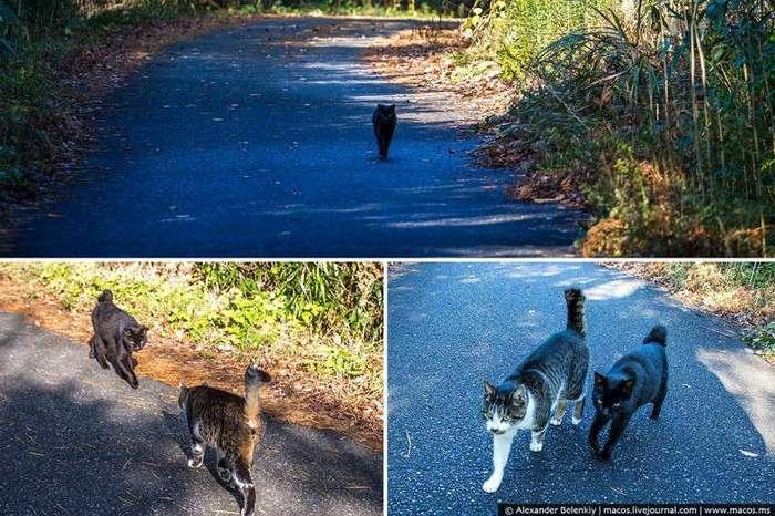 Кот здесь власть или большая прогулка по Острову котов (47 фото)