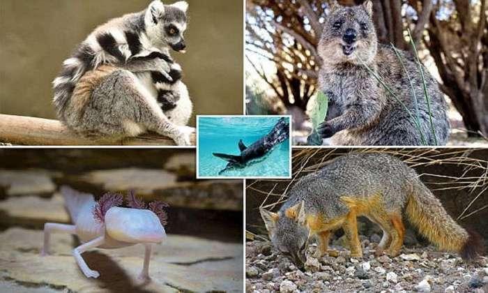 Животные, для встречи с которыми придется сильно постараться (14 фото)