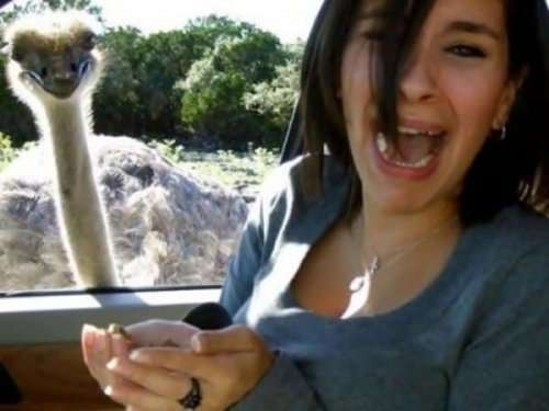 Смешные фотобомбы с животными (22 фото)