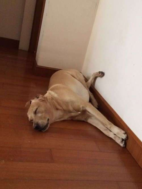 Смешные собаки, которые делают странные вещи (22 фото)