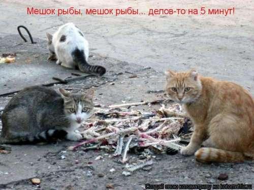 Новая котоматрица для настроения (20 фото)