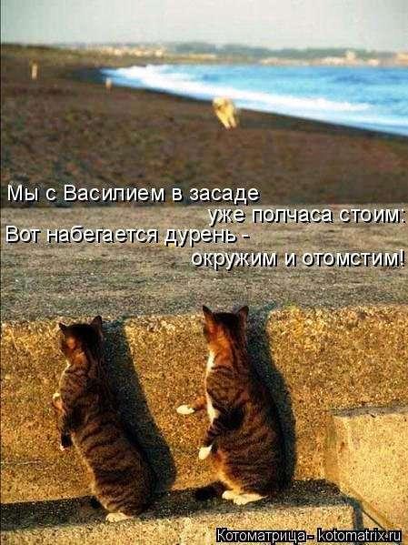Свежая котоматрица для всех (16 фото)