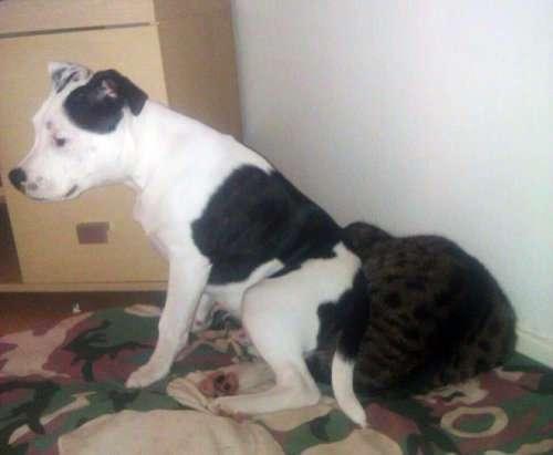 Собаки, которые отлично освоили фразу -Доминируй, властвуй, унижай!- (12 фото)