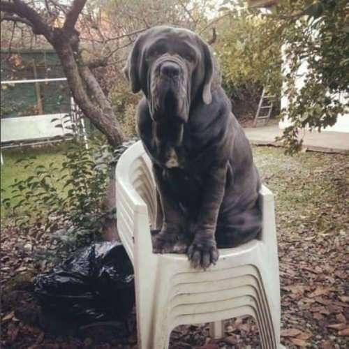 Прелестные большие собаки (22 фото)