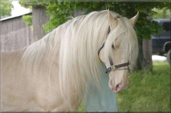 30 чудесных лошадей, от красоты которых перехватывает дыхание (30 фото)