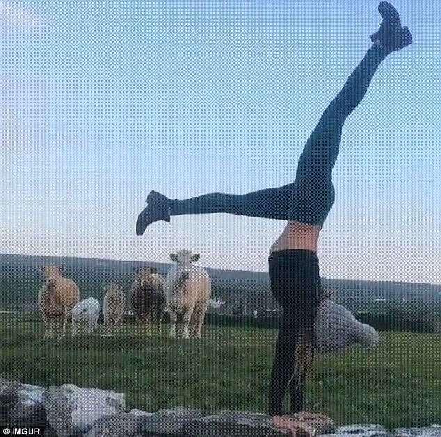 Самые странные йоги мира (15 фото)
