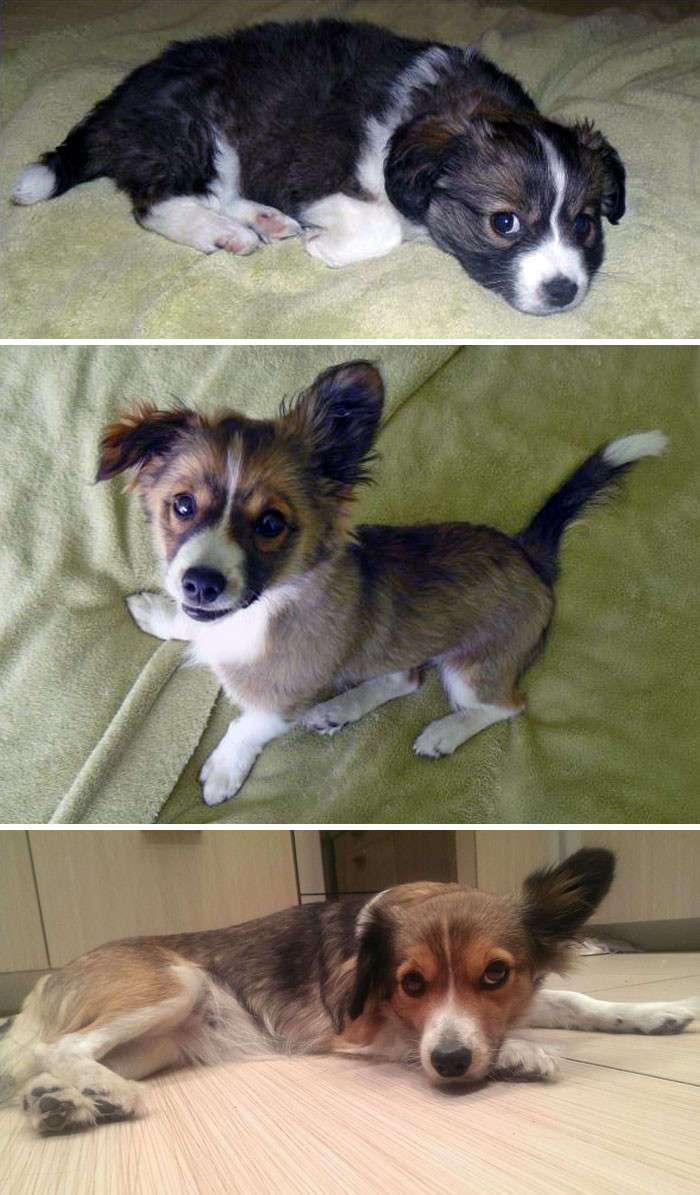 Как растут собаки (41 фото)