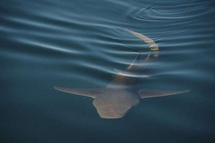Одержимый -одним кадром- - австралийский экстрим-фотограф Рассел Орд (10 фото)