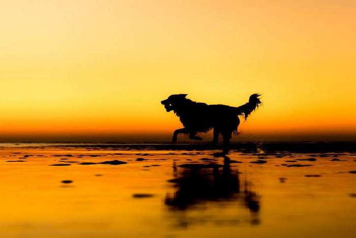 Победители фотоконкурса Dog Photographer of the Year 2017 (14 фото)