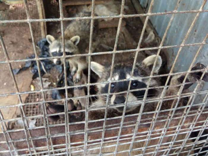 Медвежонок, еноты и олени умирают от голода в заброшенном донском зоопарке (7 фото)