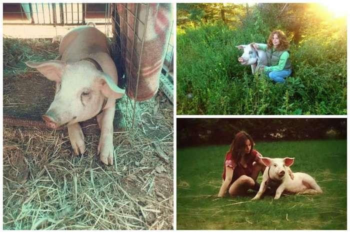 Эта девушка не пожалела денег и времени на то, чтобы спасти своего любимца (9 фото)