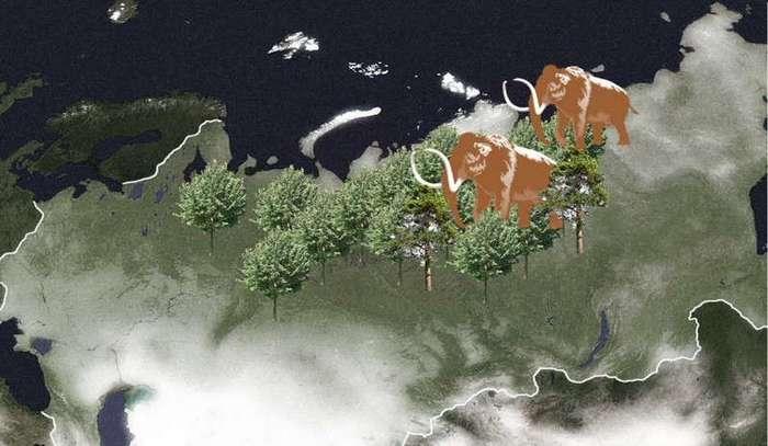 Что не так с лесом? Тайна молодых лесов (8 фото)
