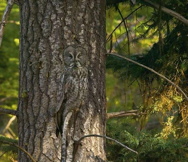 Найдите на фото спрятавшихся животных (25 фото)