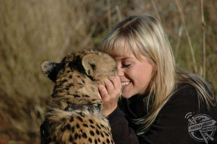 Она спасла котенка гепарда от охотников за трофеями, и он стал её лучшим другом (13 фото)