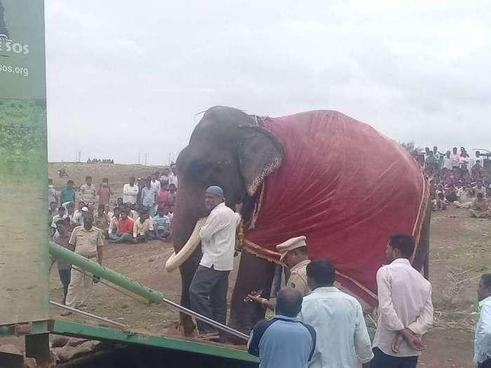 Зоозащитники освободили 75-летнего слона, который 50 лет просидел на цепи (9 фото)