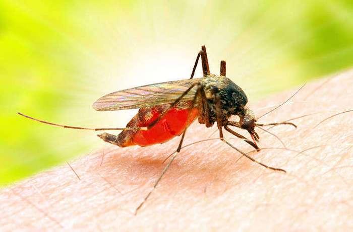 Любопытные факты о комарах (3 фото)