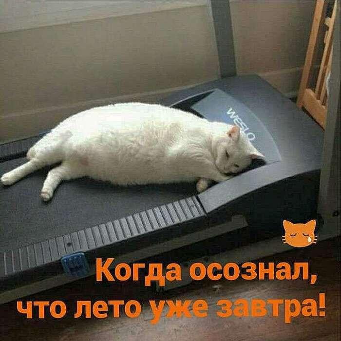 Самый злой пост о тех, кому не хватает мотивации для занятий спортом (16 фото)