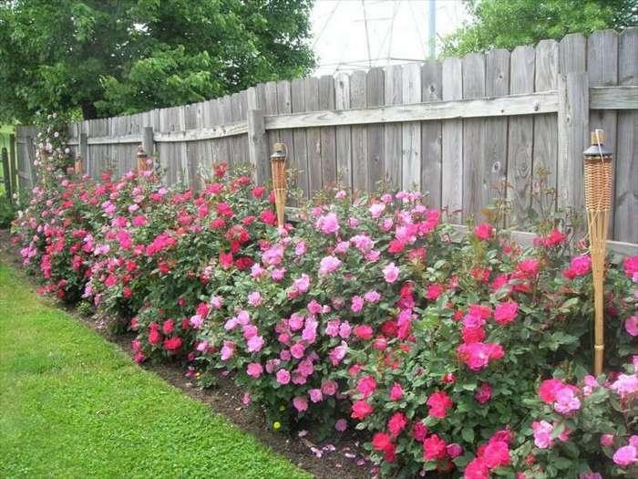 """Как мы """"выжигали"""" воровство цветов на своем участке (1 фото)"""