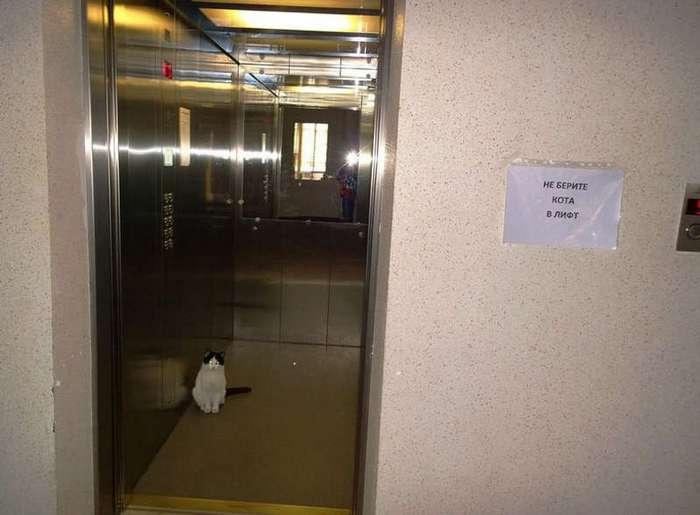 26 подъездных лифтов, от которых сплошной позитив