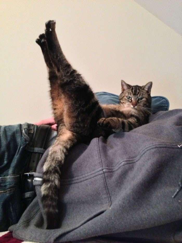 25 смешных котов, которые наотрез отказываются вести себя как нормальные животные (26 фото + 1 гиф)