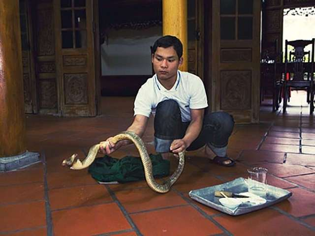 Ритуал поедания кобры. Вьетнам (6 фото)