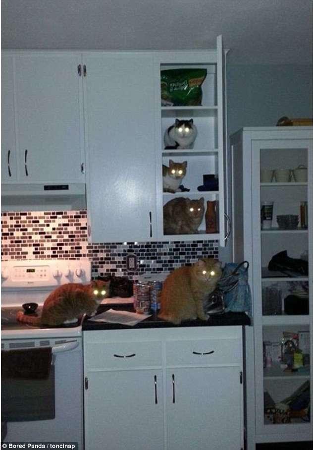 Кошки-воришки (25 фото)