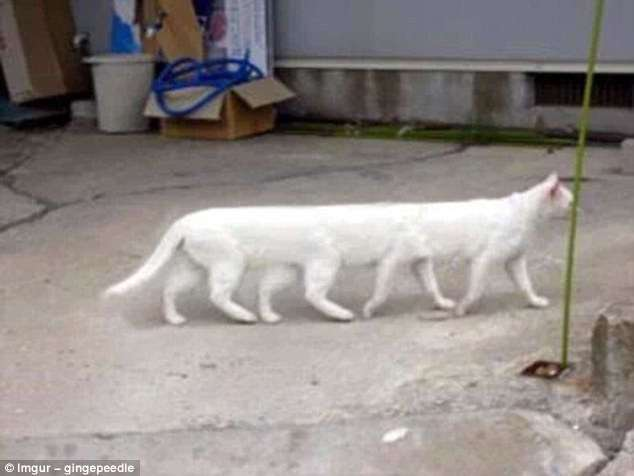 От безголового туриста до восьминогого кота (17 фото)