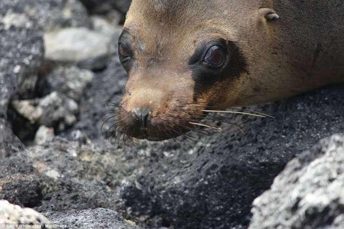 Галапагосские острова - настоящий рай на Земле (15 фото)
