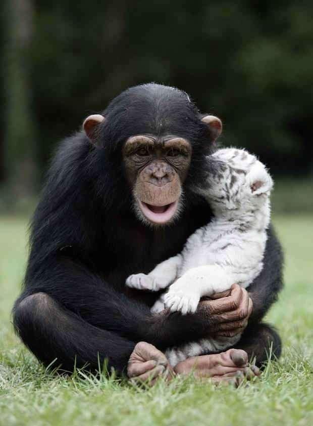 Дружба между животными разных видов (28 фото)