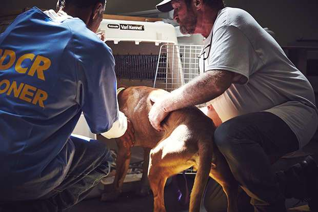 «Пес любит тебя даже в тюрьме»: как помогают друг другу заключенные и бездомные собаки