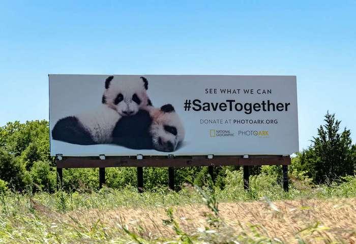 National Geographic начал кампанию, посвященную сохранению исчезающих видов