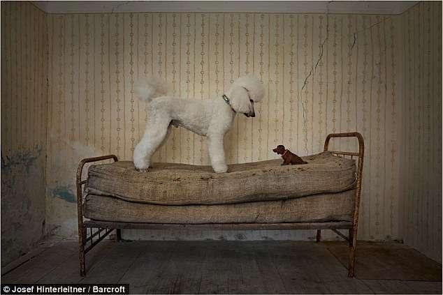 Милейшие создания на Comedy Pet Photography Awards