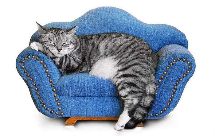 История покорения кошками древнего мира