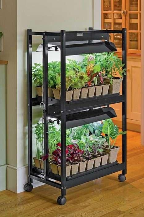 Овощи для выращивания дома 5
