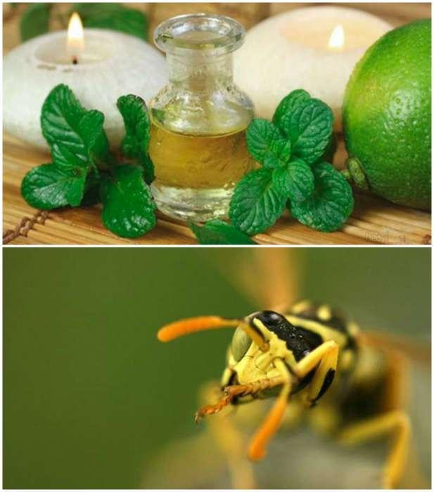 15 простых способов эффективной защиты от вредных и назойливых насекомых