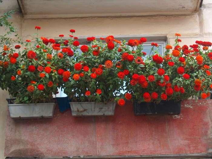 20 восхитительных идей озеленения балкона, которые удивят гостей и соседей