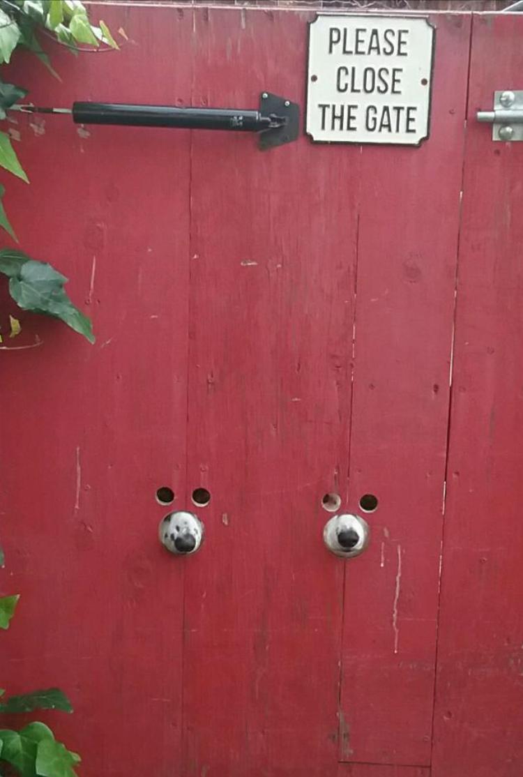 Веселые животные, которые по-любому заставят вас улыбнуться )) (30 фото)
