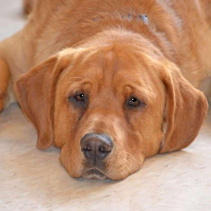 Особенный пёс из приюта почти потерял надежду, но пришёл ОН... (6 фото)